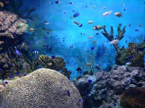 Unterwasserwelt | morguefile.com